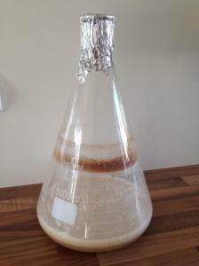 WLP099 - tisatt siste del av vørter for å starte den opp før den tilsettes ølet